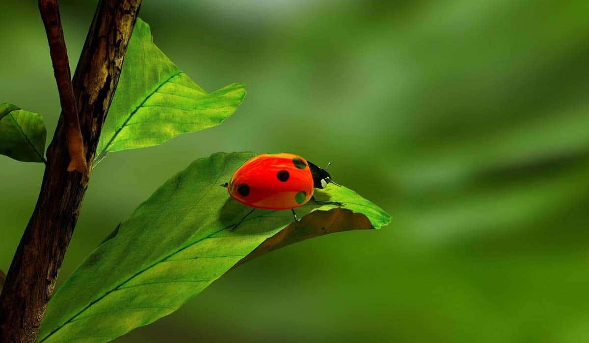 Are Beetles Harmful