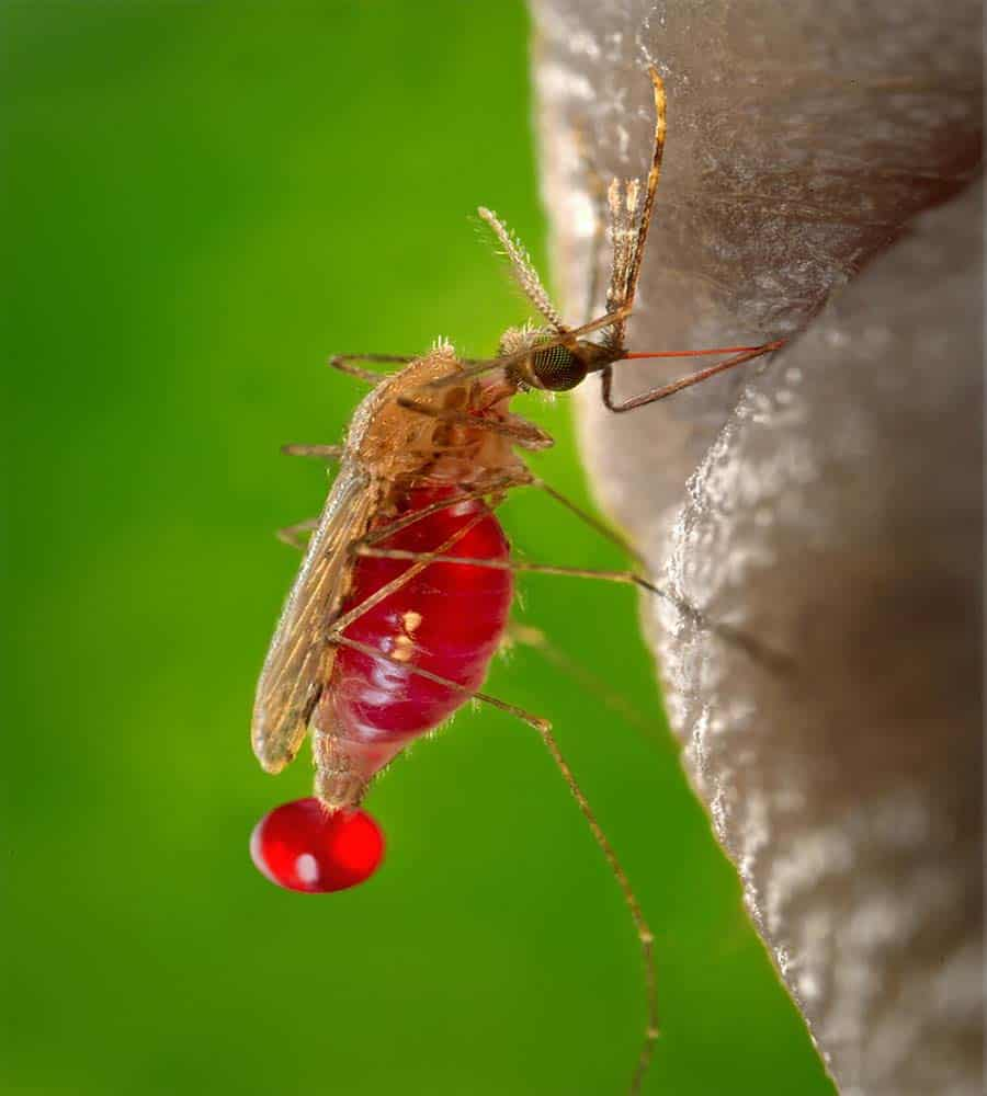 Long Term Effects Of Malaria