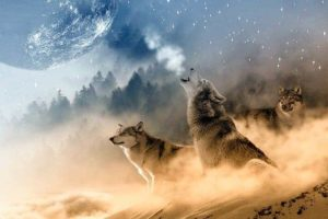 Wolves And Human Beings