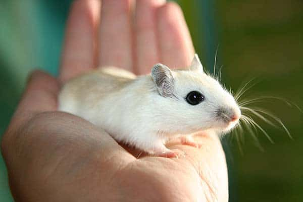 Health Problems House Mice Can Cause