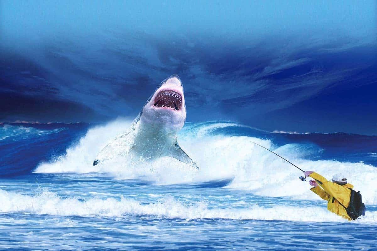 Megalodon Vs Blue Whale Size How Bigger Is Megalodon Than Blue Whale