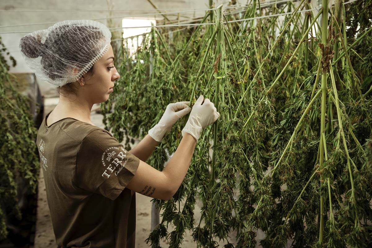 5 Reasons It's Patriotic To Support The Hemp Industry