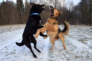 4 Considerations If You Have An Aggressive Dog